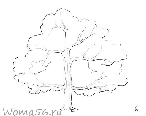 Дерево летом то каждую ветку