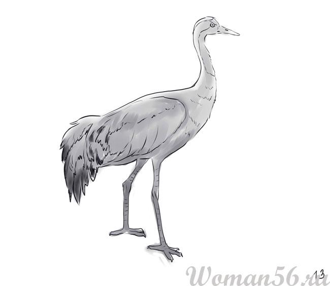 Как нарисовать птицу. Журавль