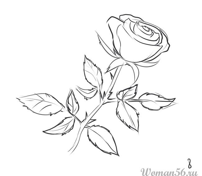 картинки 13 роз