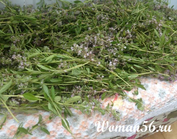 Трава чабрец полезные свойства