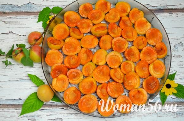 половинки абрикосов в электросушилке