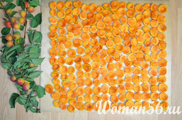 сушка абрикосов на солнце