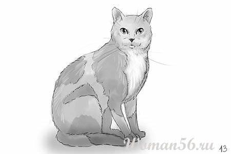 Как рисовать кошку сидящую кошку