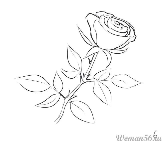 Крупные розы фото  photosfloweryru