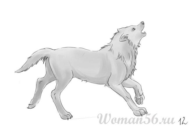 Как нарисовать волка