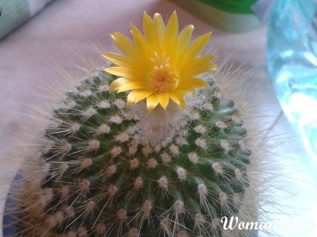kak-uchazhivat-za-kaktusom-kaktusi-foto7.jpg