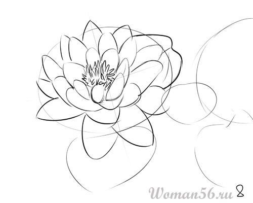 Цветы нарисованные карандашом